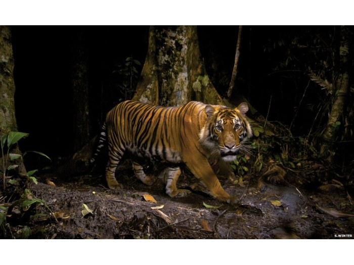 S. Winter/Veolia Environment Wildlife Photographer of the Year