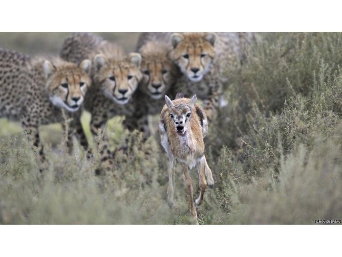 G. Bouguereau/Veolia Environment Wildlife Photographer of the Year