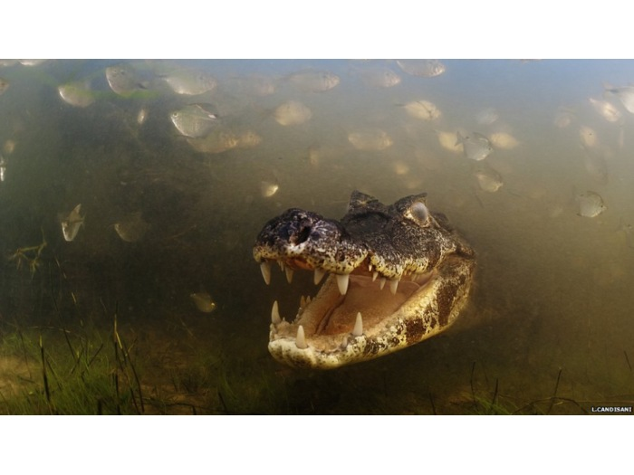 L. Candisani/Veolia Environment Wildlife Photographer of the Year