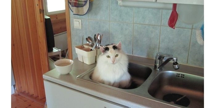 Gatinhos podem ser ótimos assistentes na cozinha. Veja só! - Foto 1 ...