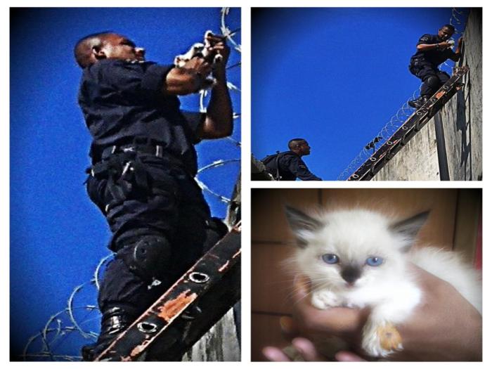 Policial do Bope salva filhote de gato em Jacarezinho, no Rio