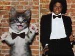 Beatles, Kiss e at Michael Jackson: gatos recriam capas de discos famosos!