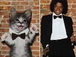Beatles, Kiss e até Michael Jackson: gatos recriam capas de discos famosos!
